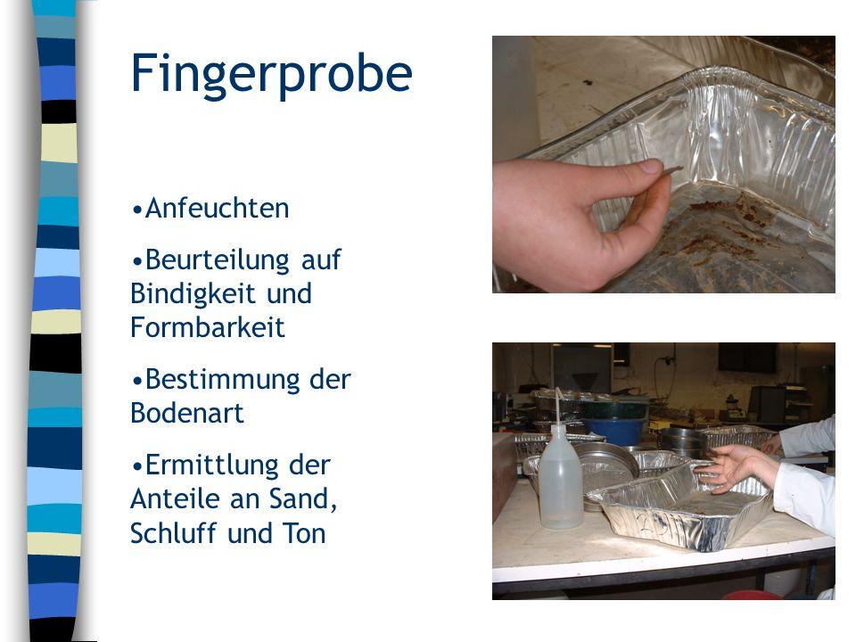 Fingerprobe (Luvisol) Ap-Horizont: B4/F4, Lu (schluffiger Lehm) Al-Horizont: B4/F4, Ut4 (stark toniger Schluff) Bt-Horizont: B5/F5, Tu3 (mittel schluffiger Ton) Stand 13.7.2005; 8h