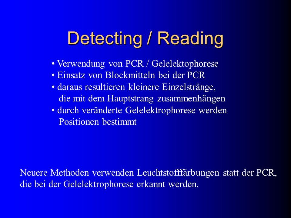 Detecting / Reading Verwendung von PCR / Gelelektophorese Einsatz von Blockmitteln bei der PCR daraus resultieren kleinere Einzelstränge, die mit dem