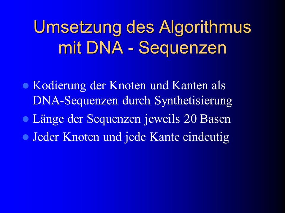 Umsetzung des Algorithmus mit DNA - Sequenzen Kodierung der Knoten und Kanten als DNA-Sequenzen durch Synthetisierung Länge der Sequenzen jeweils 20 B