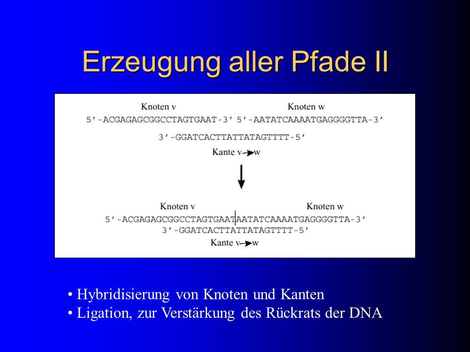 Erzeugung aller Pfade II Hybridisierung von Knoten und Kanten Ligation, zur Verstärkung des Rückrats der DNA