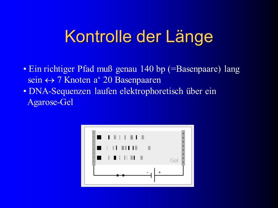Kontrolle der Länge Ein richtiger Pfad muß genau 140 bp (=Basenpaare) lang sein 7 Knoten a 20 Basenpaaren DNA-Sequenzen laufen elektrophoretisch über