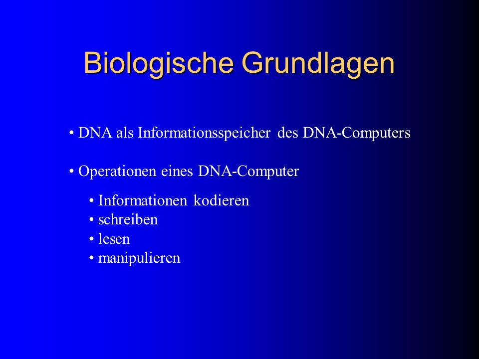 Biologische Grundlagen DNA als Informationsspeicher des DNA-Computers Operationen eines DNA-Computer Informationen kodieren schreiben lesen manipulier