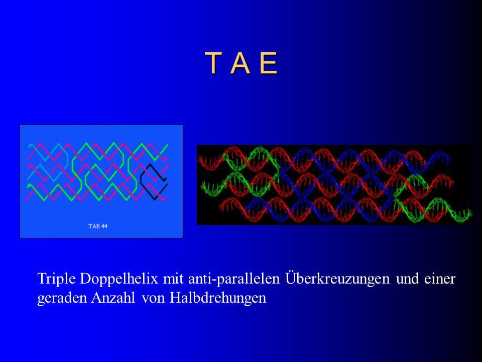 T A E Triple Doppelhelix mit anti-parallelen Überkreuzungen und einer geraden Anzahl von Halbdrehungen