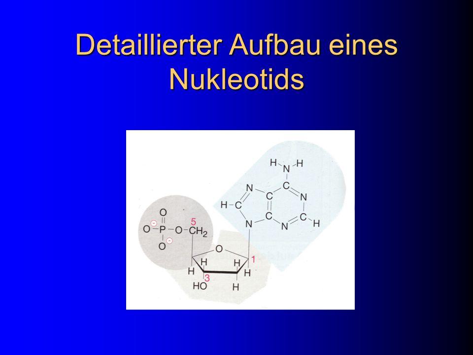 ...weitere Operationen Mixing (Crossover) Ligating (Konkatenation) Marking / Unmarking Destroying (Exonuclease Enzyme)