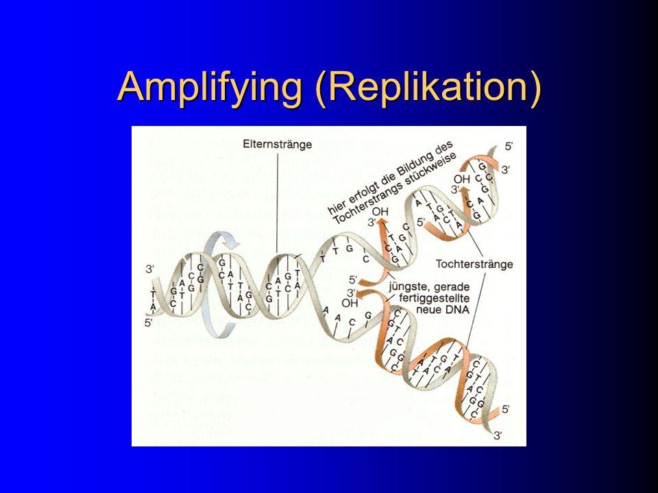 Amplifying (Replikation)