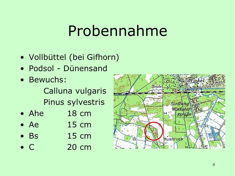 6 Probennahme Vollbüttel (bei Gifhorn) Podsol - Dünensand Bewuchs: Calluna vulgaris Pinus sylvestris Ahe18 cm Ae15 cm Bs15 cm C20 cm