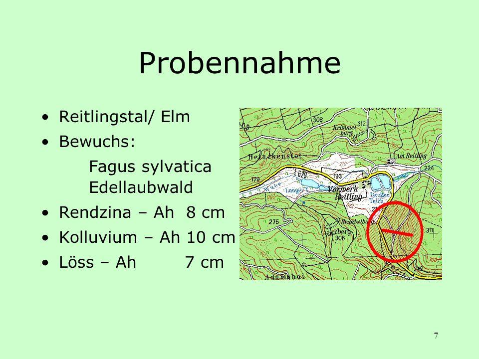 7 Probennahme Reitlingstal/ Elm Bewuchs: Fagus sylvatica Edellaubwald Rendzina – Ah 8 cm Kolluvium – Ah 10 cm Löss – Ah 7 cm