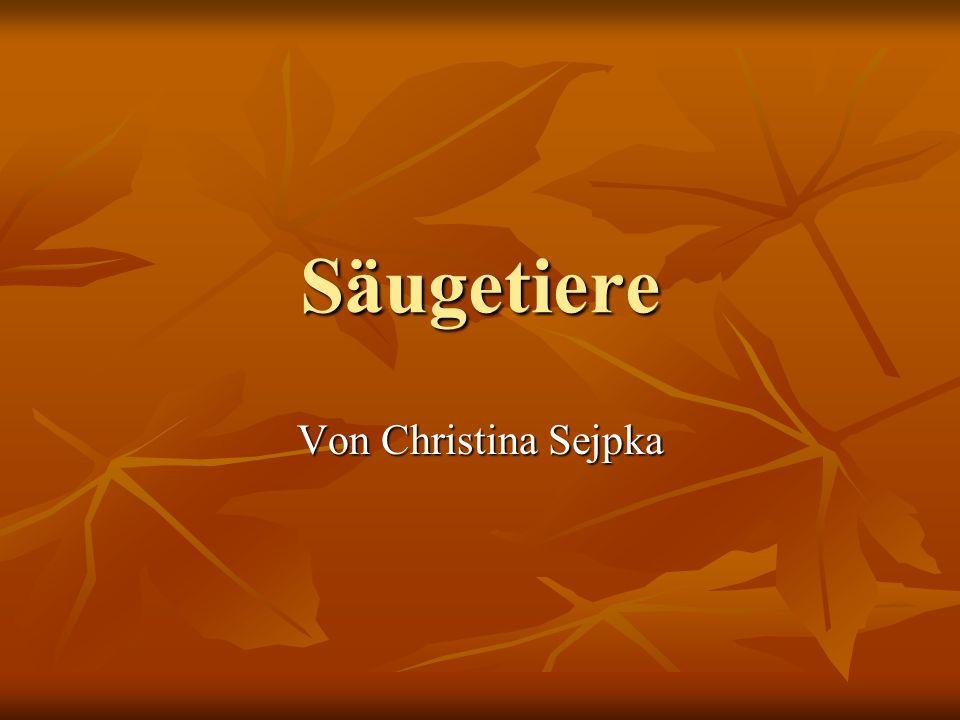 Säugetiere Von Christina Sejpka