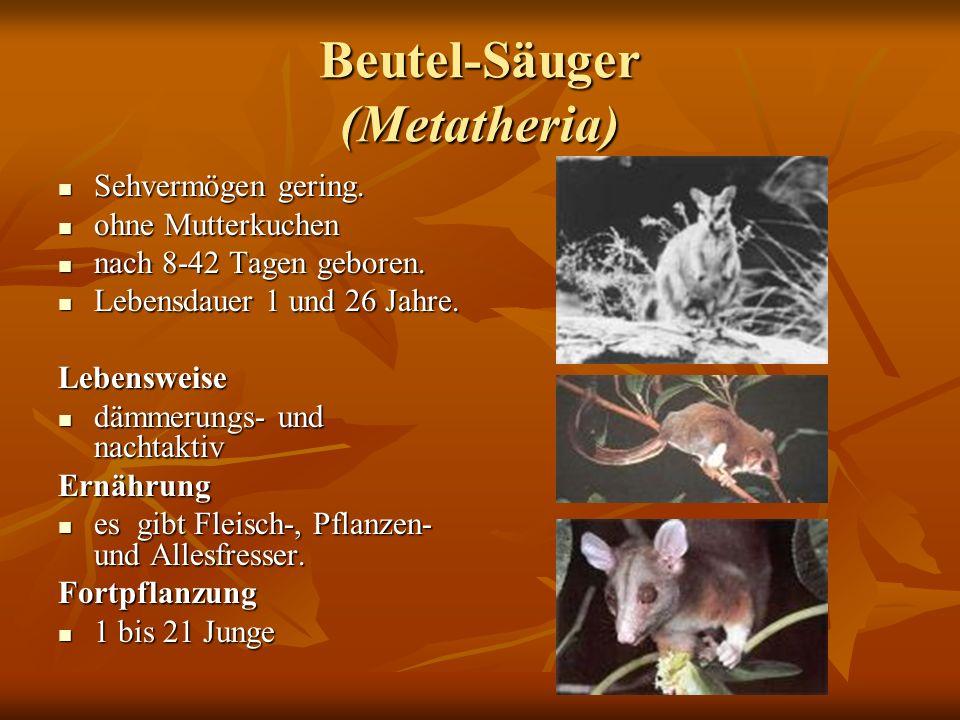 Beutel-Säuger (Metatheria) Sehvermögen gering. Sehvermögen gering. ohne Mutterkuchen ohne Mutterkuchen nach 8-42 Tagen geboren. nach 8-42 Tagen gebore