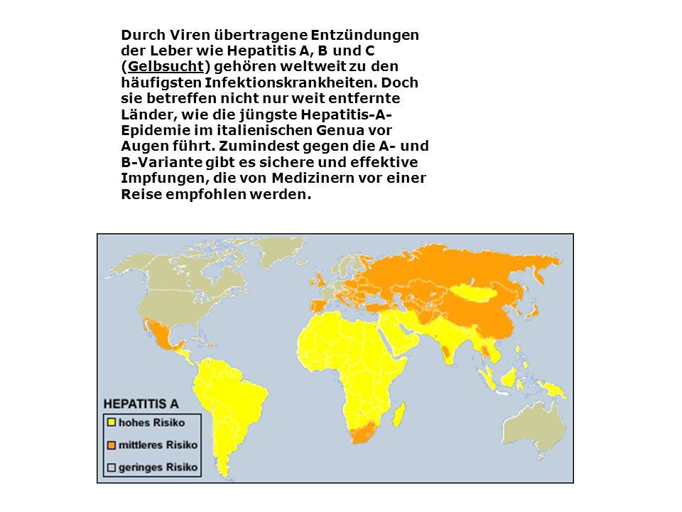 Durch Viren übertragene Entzündungen der Leber wie Hepatitis A, B und C (Gelbsucht) gehören weltweit zu den häufigsten Infektionskrankheiten. Doch sie
