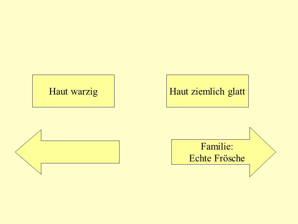 Haut warzigHaut ziemlich glatt Familie: Echte Frösche