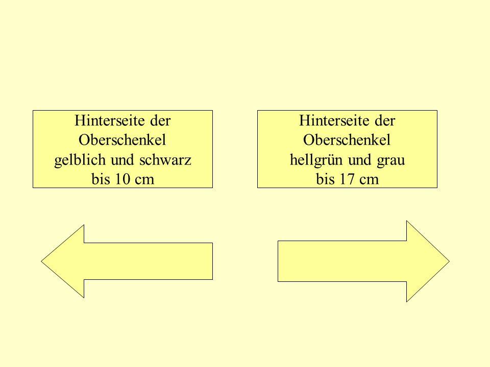 Hinterseite der Oberschenkel gelblich und schwarz bis 10 cm Hinterseite der Oberschenkel hellgrün und grau bis 17 cm