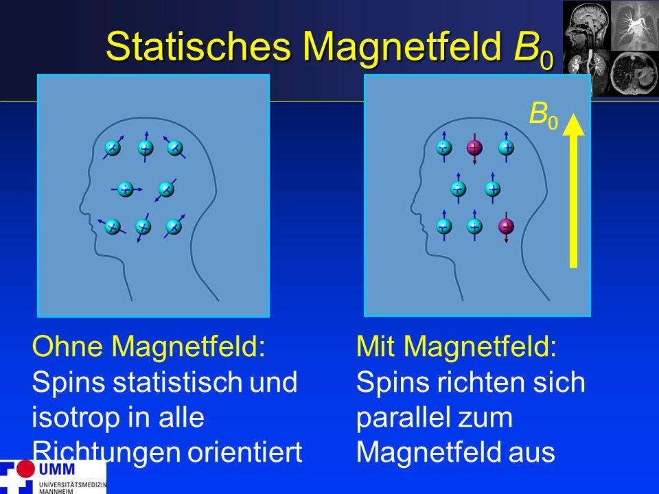 Statisches Magnetfeld B 0 Ohne Magnetfeld: Spins statistisch und isotrop in alle Richtungen orientiert Mit Magnetfeld: Spins richten sich parallel zum