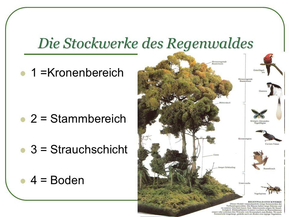 Die Stockwerke des Regenwaldes 1 =Kronenbereich 2 = Stammbereich 3 = Strauchschicht 4 = Boden