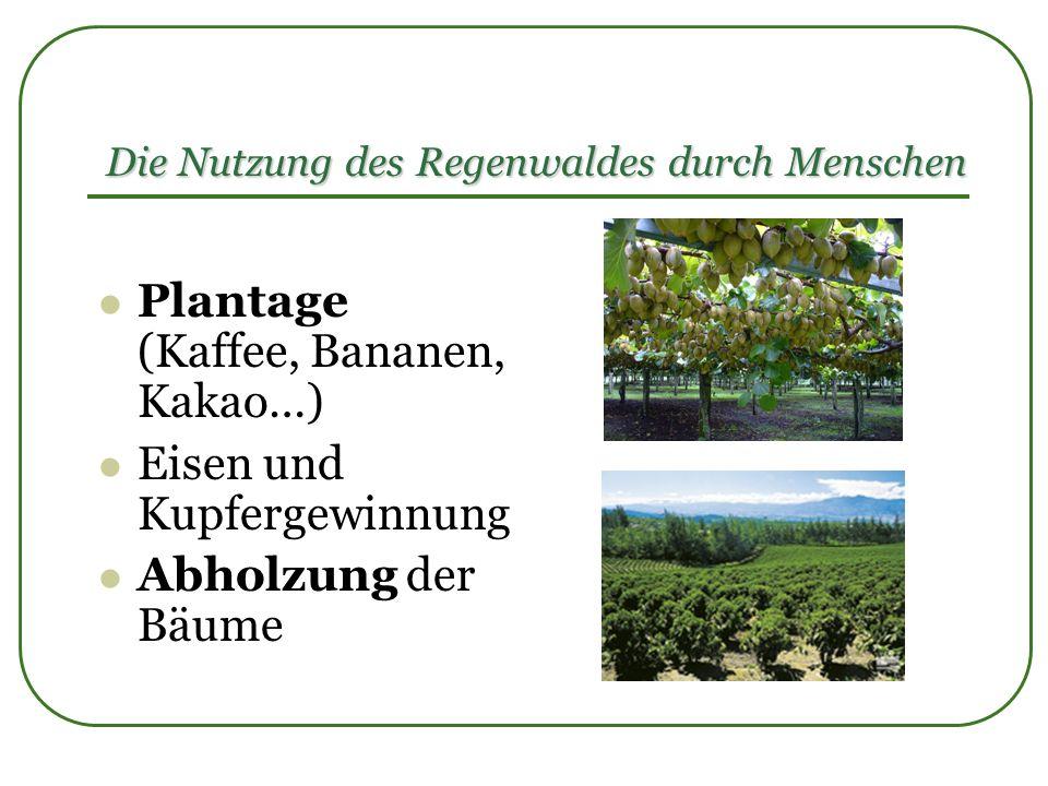 Die Nutzung des Regenwaldes durch Menschen Plantage (Kaffee, Bananen, Kakao…) Eisen und Kupfergewinnung Abholzung der Bäume
