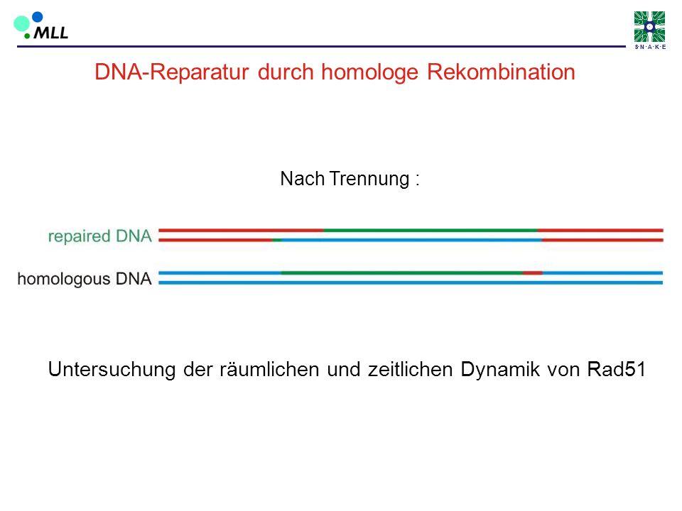 S N A K ES N A K E Untersuchung der räumlichen und zeitlichen Dynamik von Rad51 Nach Trennung : DNA-Reparatur durch homologe Rekombination