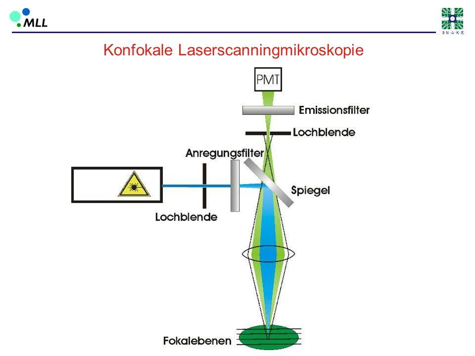 S N A K E Konfokale Laserscanningmikroskopie