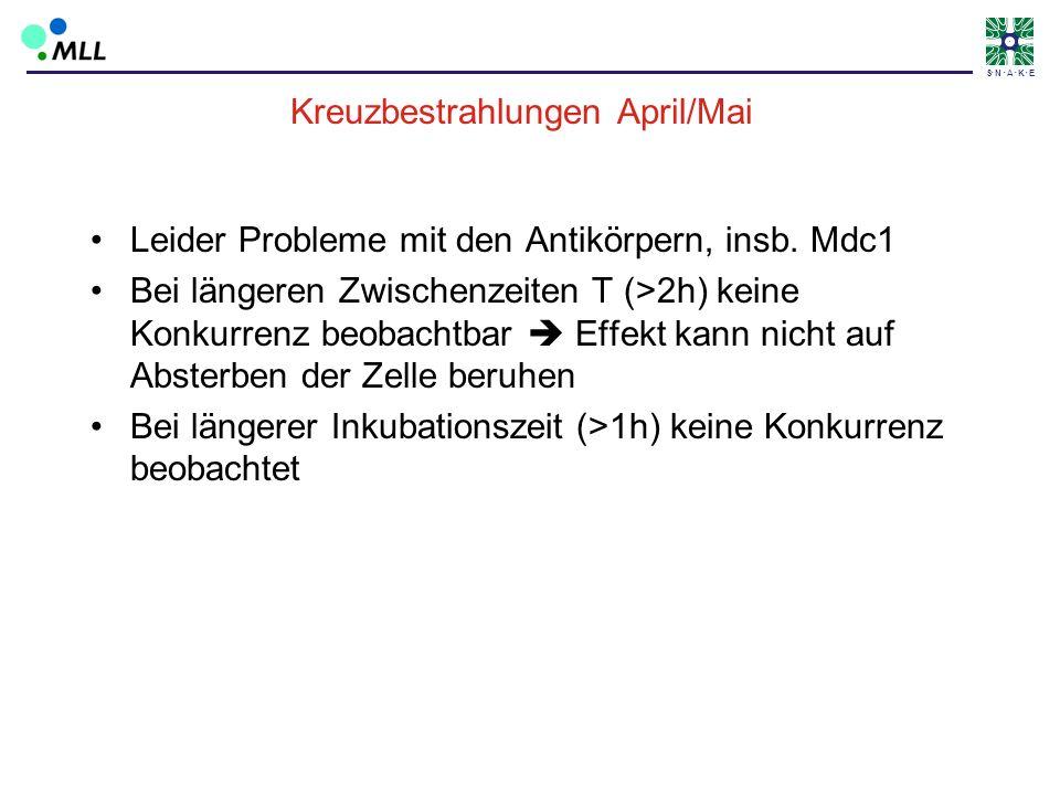 S N A K E Kreuzbestrahlungen April/Mai Leider Probleme mit den Antikörpern, insb. Mdc1 Bei längeren Zwischenzeiten T (>2h) keine Konkurrenz beobachtba
