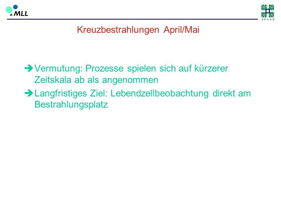 S N A K E Kreuzbestrahlungen April/Mai Vermutung: Prozesse spielen sich auf kürzerer Zeitskala ab als angenommen Langfristiges Ziel: Lebendzellbeobach