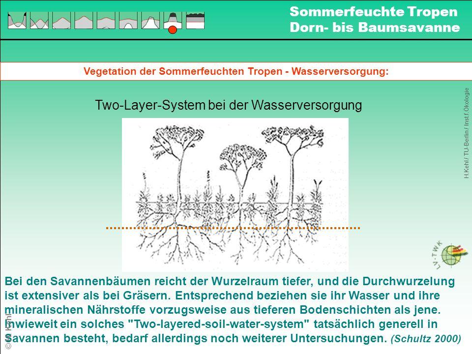 Vegetation der Sommerfeuchten Tropen - Wasserversorgung: Two-Layer-System bei der Wasserversorgung Bei den Savannenbäumen reicht der Wurzelraum tiefer, und die Durchwurzelung ist extensiver als bei Gräsern.