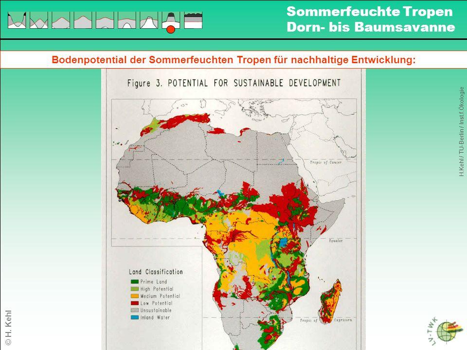 Bodenpotential der Sommerfeuchten Tropen für nachhaltige Entwicklung: H.Kehl / TU-Berlin / Inst.f.Ökologie Sommerfeuchte Tropen Dorn- bis Baumsavanne © H.