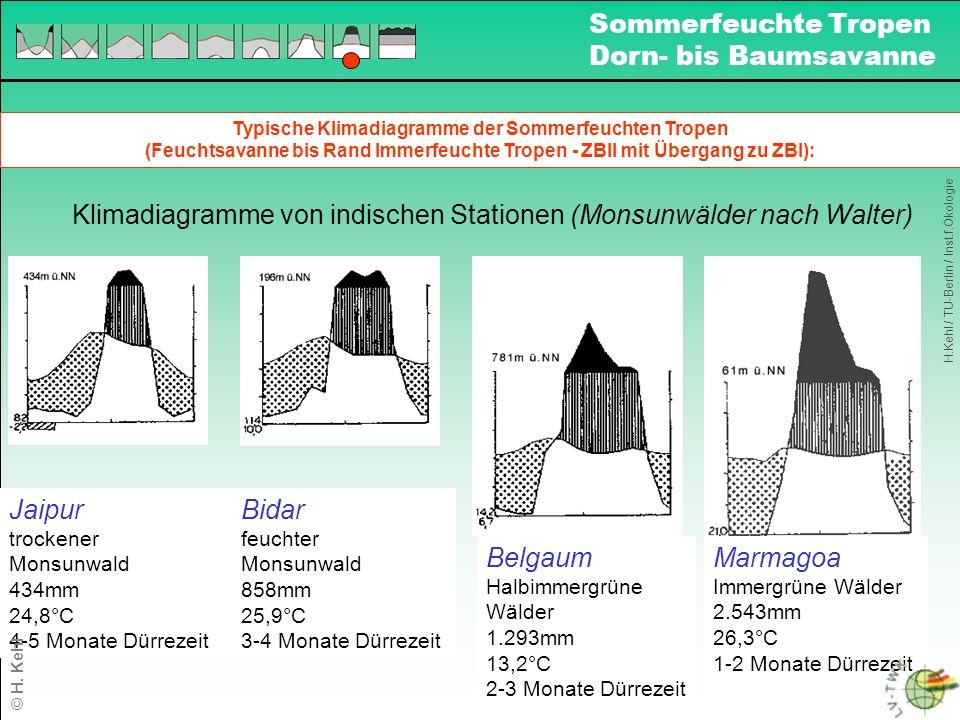Termiten in den Sommerfeuchten Tropen: H.Kehl / TU-Berlin / Inst.f.Ökologie Sommerfeuchte Tropen Dorn- bis Baumsavanne © H.