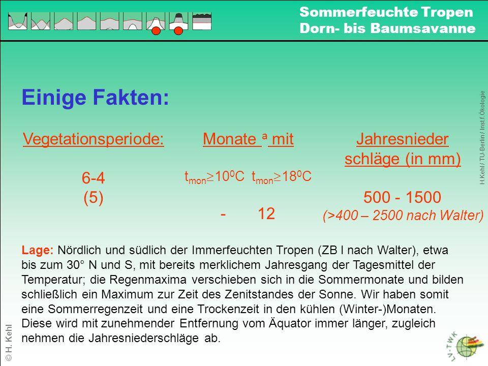 Einige Fakten: Vegetationsperiode: 6-4 (5) Monate a mit t mon 10 0 C t mon 18 0 C - 12 Jahresnieder schläge (in mm) 500 - 1500 (>400 – 2500 nach Walter) Lage: Nördlich und südlich der Immerfeuchten Tropen (ZB I nach Walter), etwa bis zum 30° N und S, mit bereits merklichem Jahresgang der Tagesmittel der Temperatur; die Regenmaxima verschieben sich in die Sommermonate und bilden schließlich ein Maximum zur Zeit des Zenitstandes der Sonne.