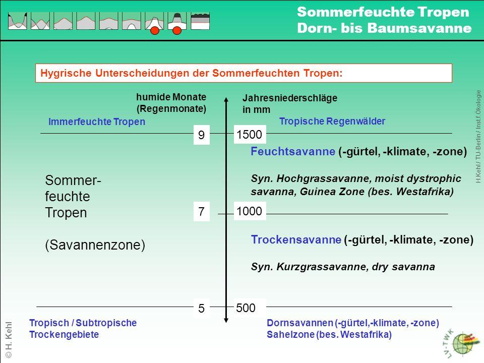 Definition von Savannen unter Einbeziehung von Bodentextur u.