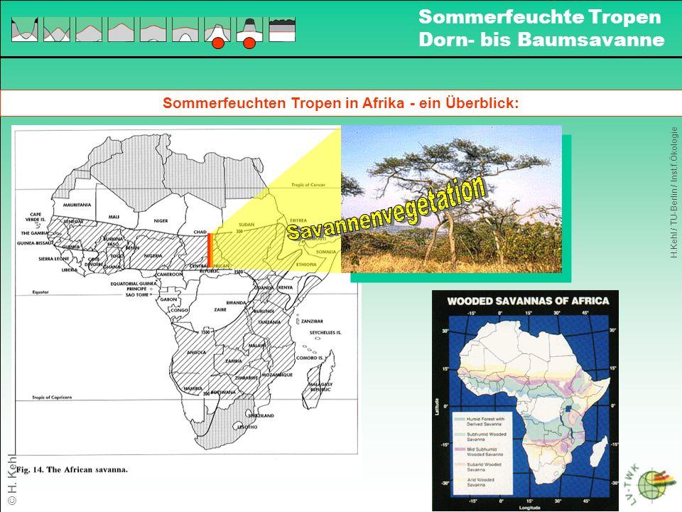 Sommerfeuchten Tropen in Afrika - ein Überblick: H.Kehl / TU-Berlin / Inst.f.Ökologie Sommerfeuchte Tropen Dorn- bis Baumsavanne © H.