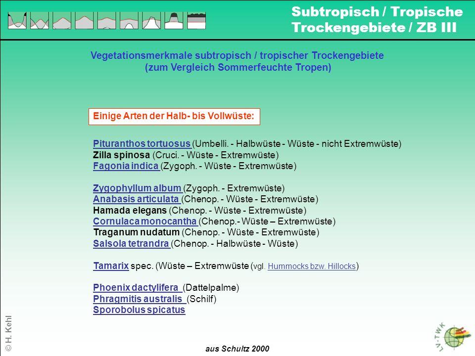 16 aus Schultz 2000 Vegetationsmerkmale subtropisch / tropischer Trockengebiete (zum Vergleich Sommerfeuchte Tropen) Einige Arten der Halb- bis Vollwü