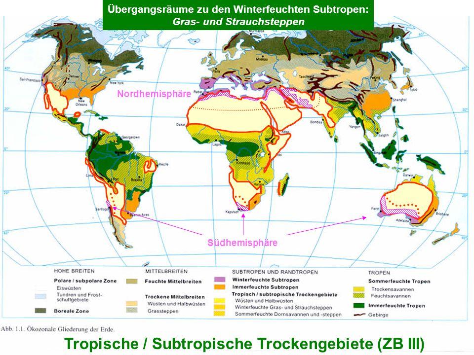 5 Tropische / Subtropische Trockengebiete (ZB III) Übergangsräume zu den Winterfeuchten Subtropen: Gras- und Strauchsteppen Nordhemisphäre Südhemisphä
