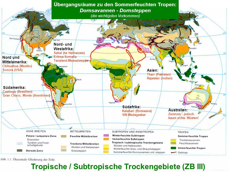 6 Tropische / Subtropische Trockengebiete (ZB III) Übergangsräume zu den Sommerfeuchten Tropen: Dornsavannen - Dornsteppen (die wichtigsten Vorkommen)