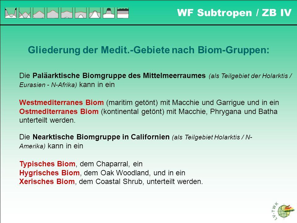 WF Subtropen / ZB IV Gliederung der Medit.-Gebiete nach Biom-Gruppen: Die Paläarktische Biomgruppe des Mittelmeerraumes (als Teilgebiet der Holarktis