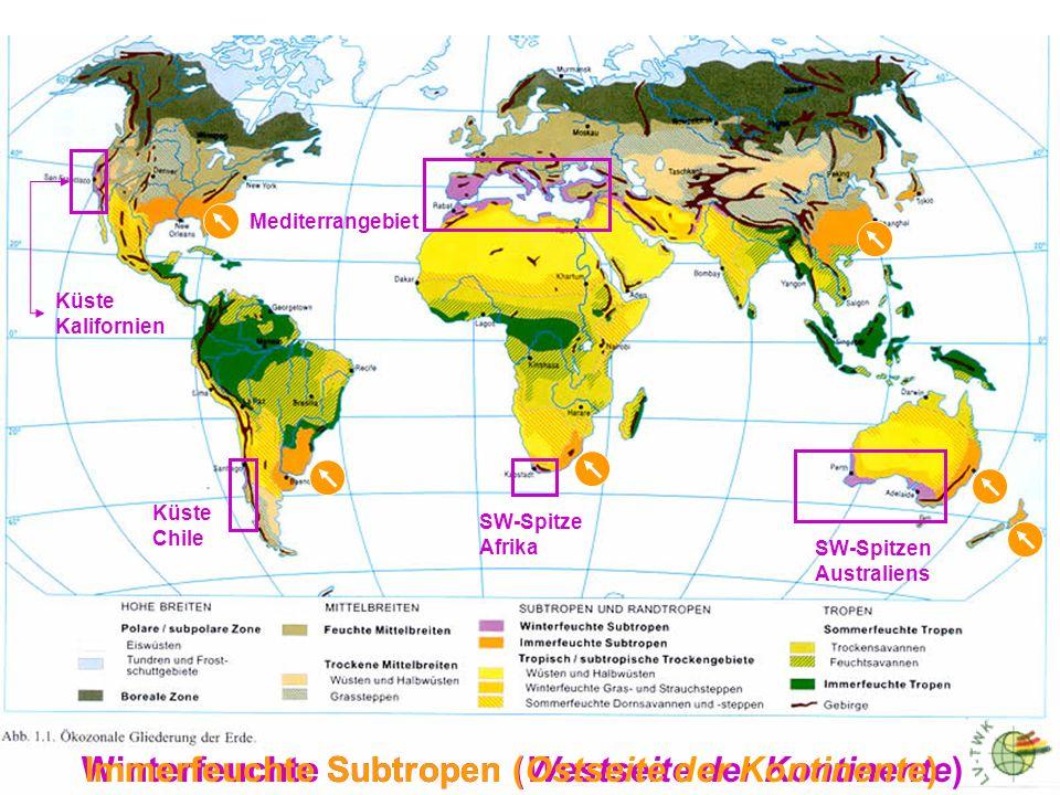 Südamerika mit Chile Afrika mit Südafrika Australien mit Südaustralien Eurasien mit Mittelmeergebiet Nordamerika mit Californien nach WALTER 1968, aus WALTER & BRECKLE 1991, stark verändert Gebiete mit mediterranem Klimatypus = Zonobiom IV (vorwiegend an der Westflanke der Kontinente) Punktiert: semiaride bis aride Gebiete mit vorwiegend Winterregen 40 30 40