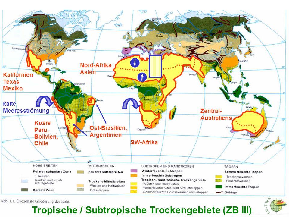 Tropische / Subtropische Trockengebiete (ZB III) Halbwüsten und Wüsten: (die wichtigsten Vorkommen) Nord und Mittelamerika: KEINE echten Wüsten.