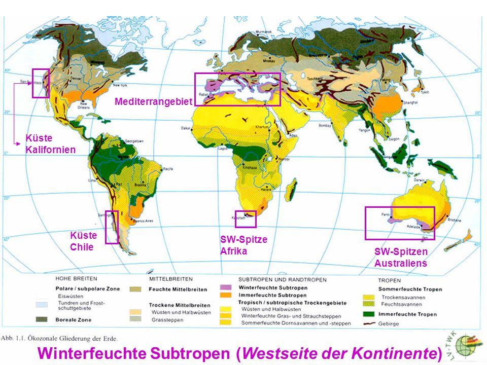 7 Immerfeuchte Subtropen (Ostseite der Kontinente)