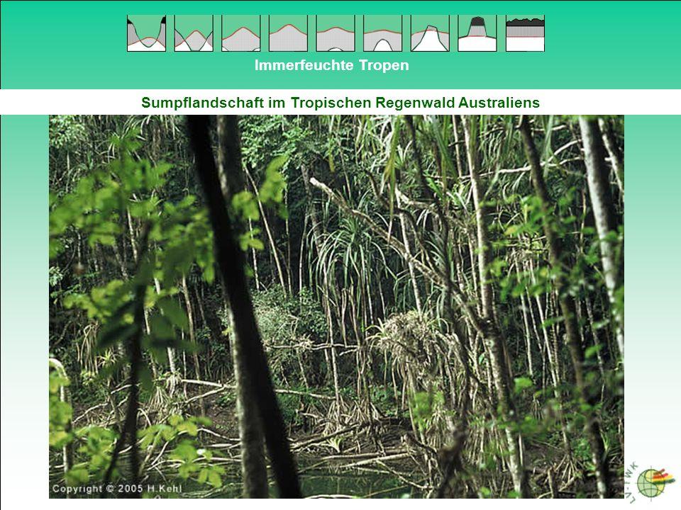 Immerfeuchte Tropen Sumpflandschaft im Tropischen Regenwald Australiens