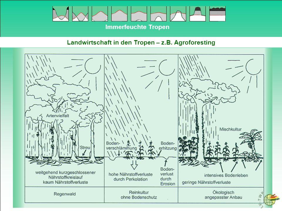 Immerfeuchte Tropen Landwirtschaft in den Tropen – z.B. Agroforesting