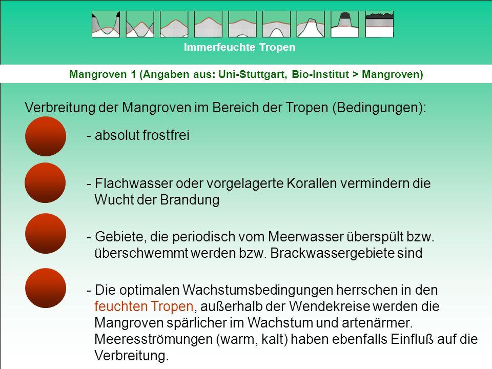 Immerfeuchte Tropen Mangroven 1 (Angaben aus: Uni-Stuttgart, Bio-Institut > Mangroven) Verbreitung der Mangroven im Bereich der Tropen (Bedingungen):