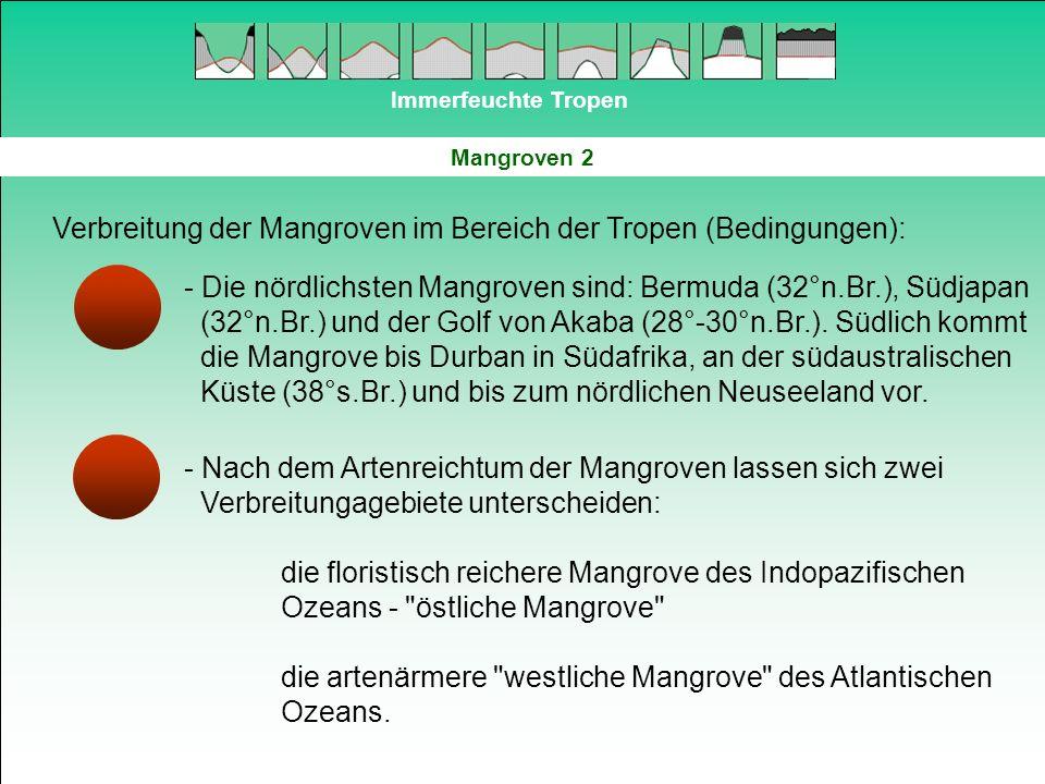 Immerfeuchte Tropen Mangroven 2 Verbreitung der Mangroven im Bereich der Tropen (Bedingungen): - Die nördlichsten Mangroven sind: Bermuda (32°n.Br.),