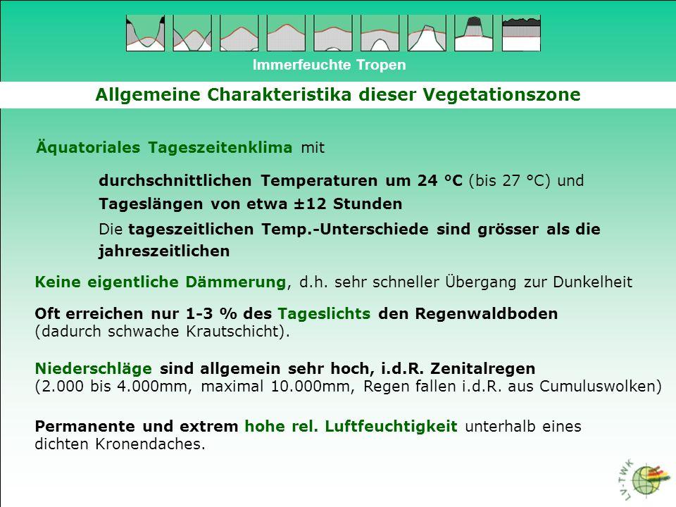 Immerfeuchte Tropen Allgemeine Charakteristika dieser Vegetationszone Äquatoriales Tageszeitenklima mit durchschnittlichen Temperaturen um 24 °C (bis