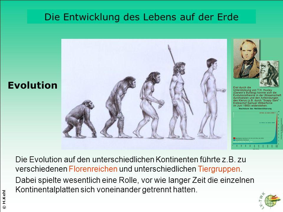 Die Evolution auf den unterschiedlichen Kontinenten führte z.B. zu verschiedenen Florenreichen und unterschiedlichen Tiergruppen. © H.Kehl Dabei spiel