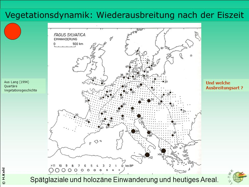 Spätglaziale und holozäne Einwanderung und heutiges Areal.