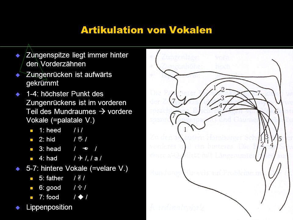 Artikulation von Vokalen Zungenspitze liegt immer hinter den Vorderzähnen Zungenrücken ist aufwärts gekrümmt 1-4: höchster Punkt des Zungenrückens ist