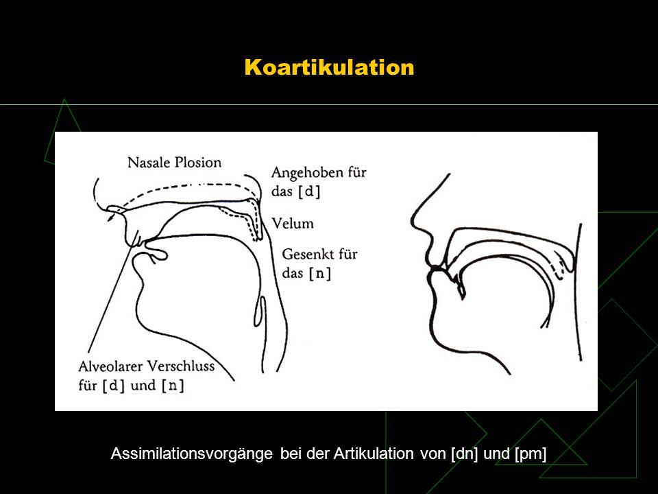Koartikulation Assimilationsvorgänge bei der Artikulation von [dn] und [pm]