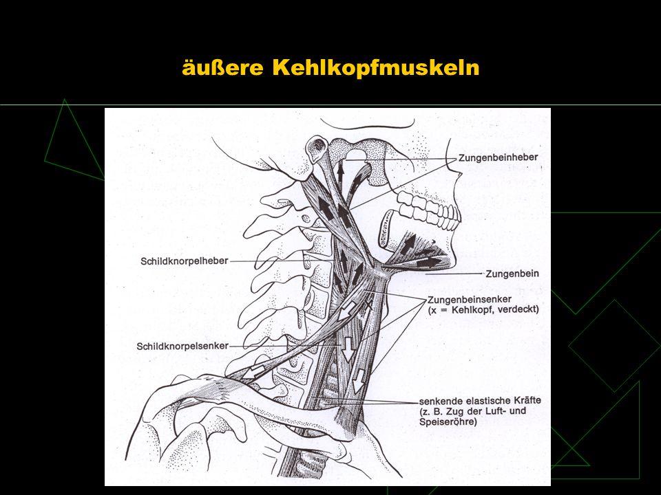 äußere Kehlkopfmuskeln