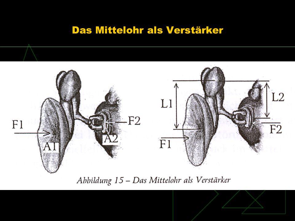 Das Mittelohr als Verstärker