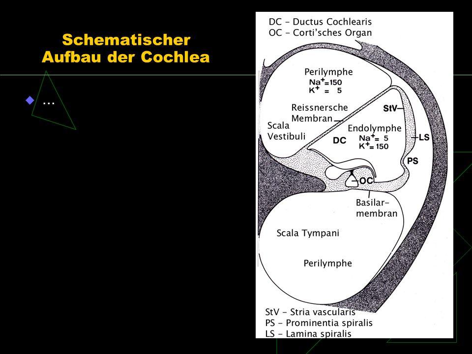Schematischer Aufbau der Cochlea...
