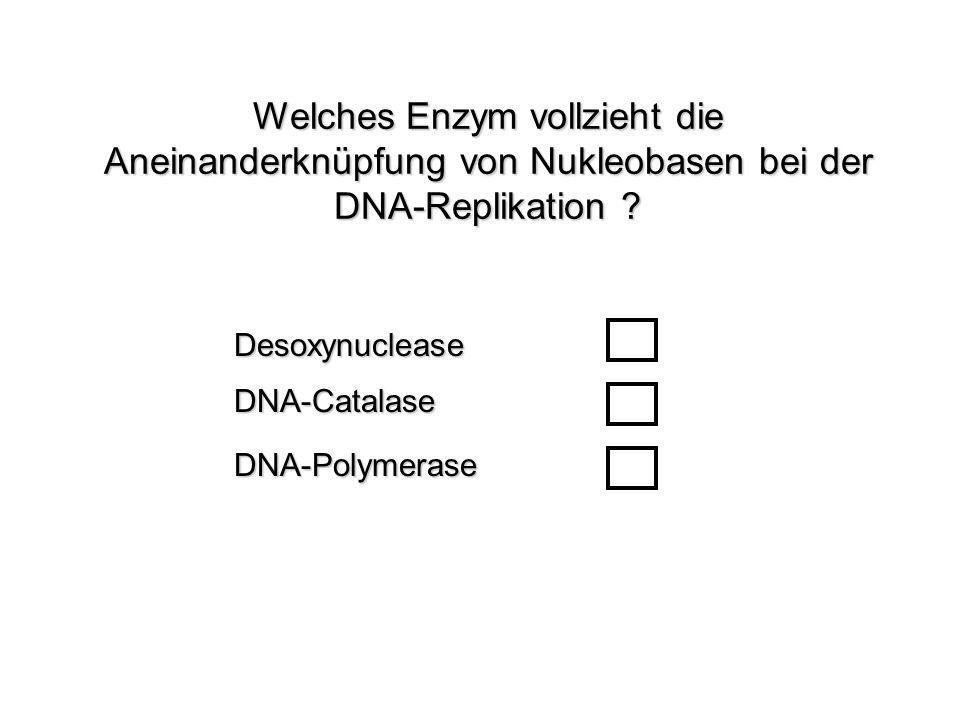 Welches Enzym vollzieht die Aneinanderknüpfung von Nukleobasen bei der DNA-Replikation ? DNA-CatalaseDesoxynucleaseDNA-Polymerase