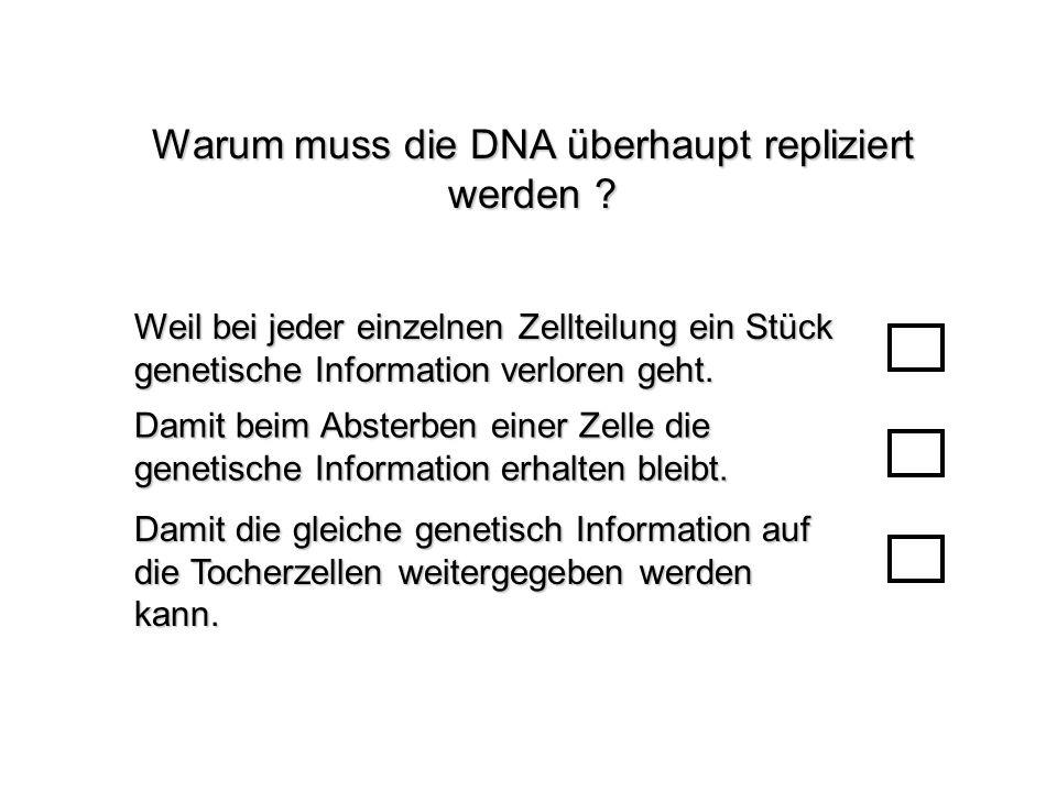 Warum muss die DNA überhaupt repliziert werden ? Damit die gleiche genetisch Information auf die Tocherzellen weitergegeben werden kann. Damit beim Ab